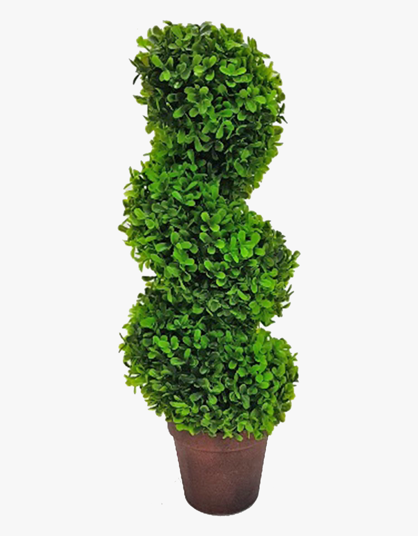 Topiary Tree Spiral - Grass, HD Png Download, Free Download