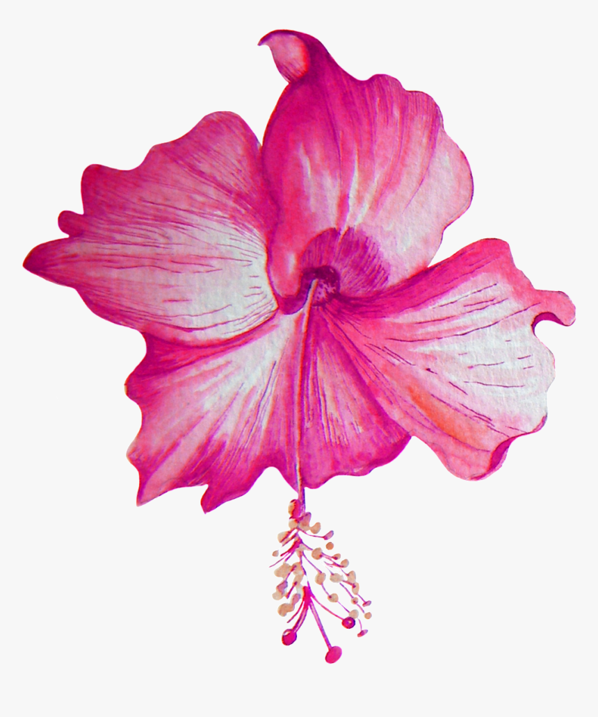 Beautiful Hibiscus Flower Transparent Png - Portable Network Graphics, Png Download, Free Download