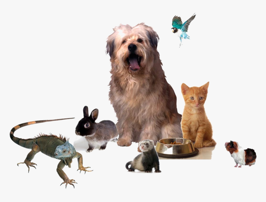 Different Kinds Of Pets Png, Transparent Png, Free Download