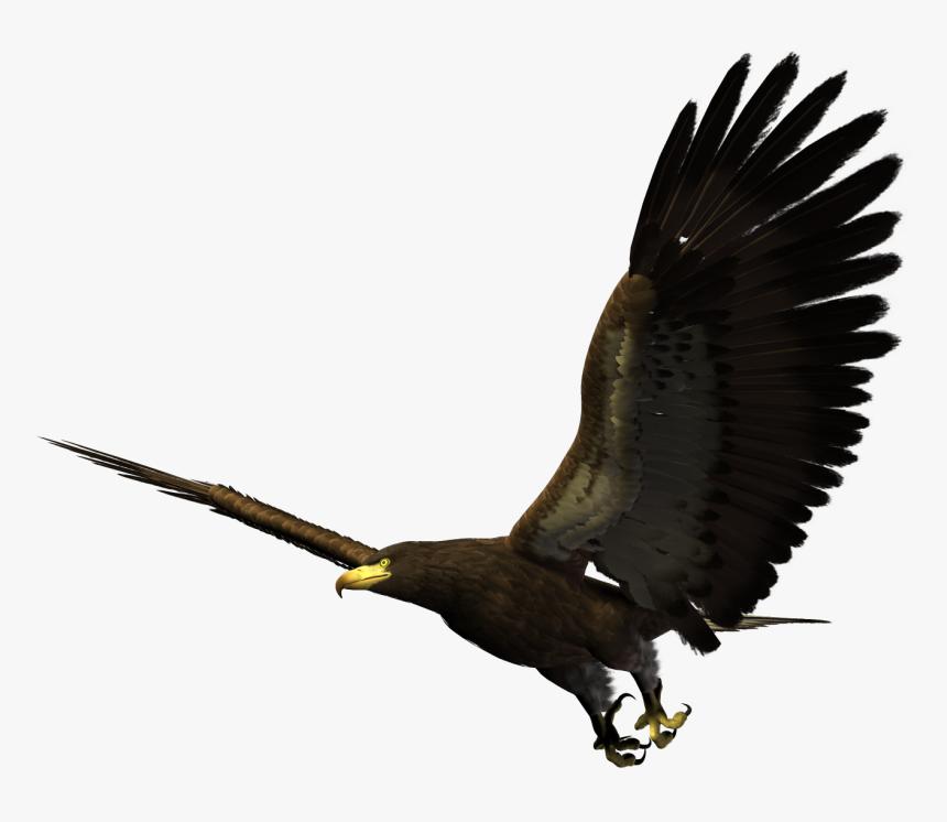 Hawk Flying Png, Transparent Png, Free Download