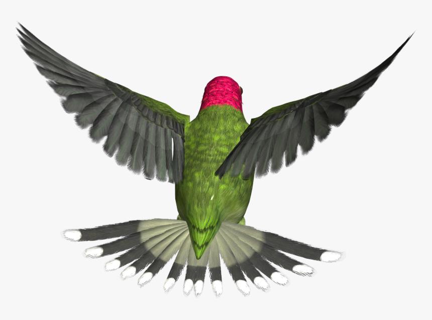 Bird Png - Flying Bird Gif Transparent, Png Download, Free Download