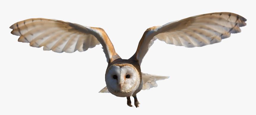 Barn Owl Png, Transparent Png, Free Download