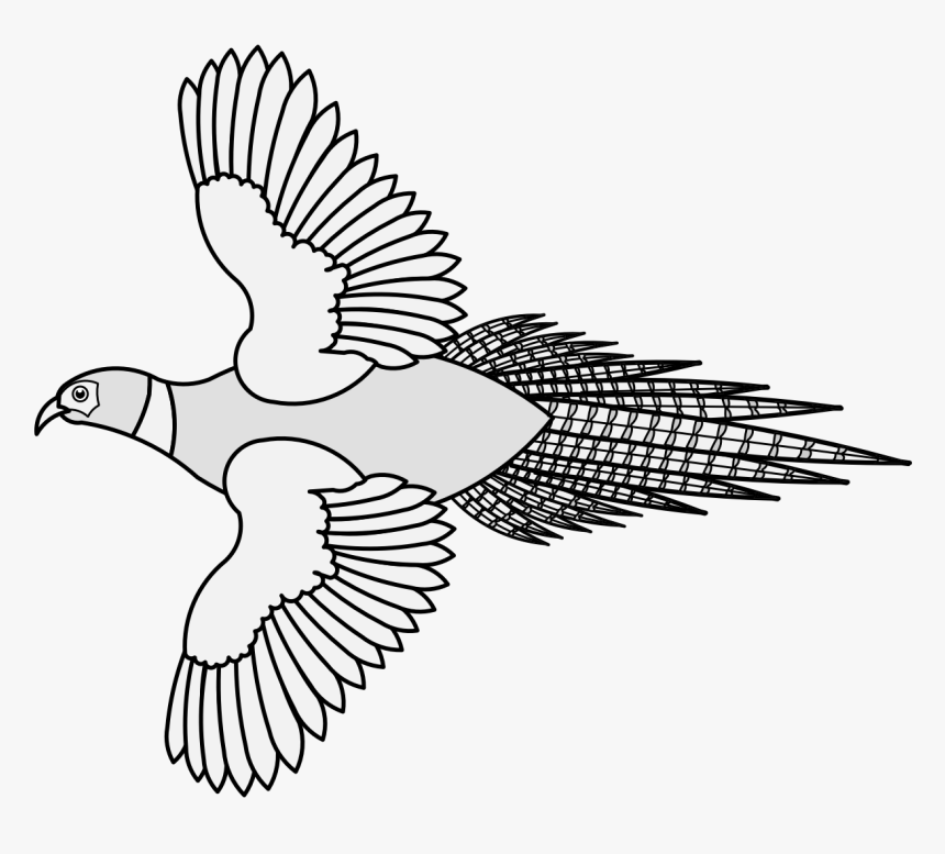 Transparent Doves Flying Png - Pigeons And Doves, Png Download, Free Download