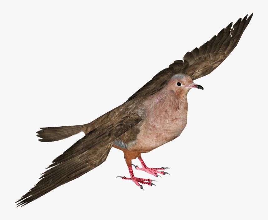 Pigeons And Doves , Png Download - Jambu Fruit Dove Transparent, Png Download, Free Download
