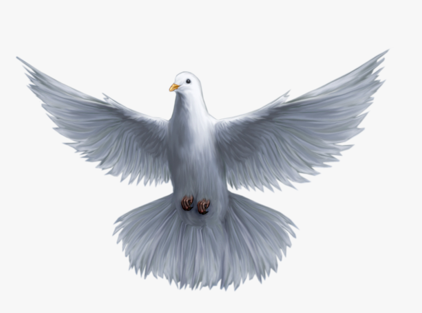 Holy God Pomba Saint Spirit Trinity Clipart - Holy Spirit Dove Png, Transparent Png, Free Download
