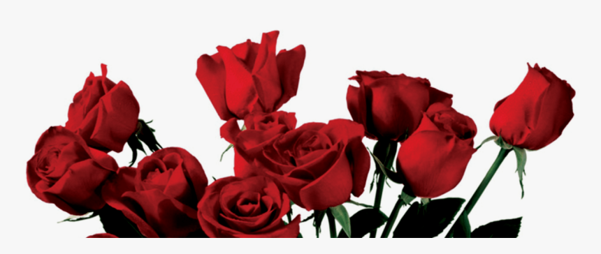 Transparent Rose Clipart , Aesthetic Red Rose Png, Png