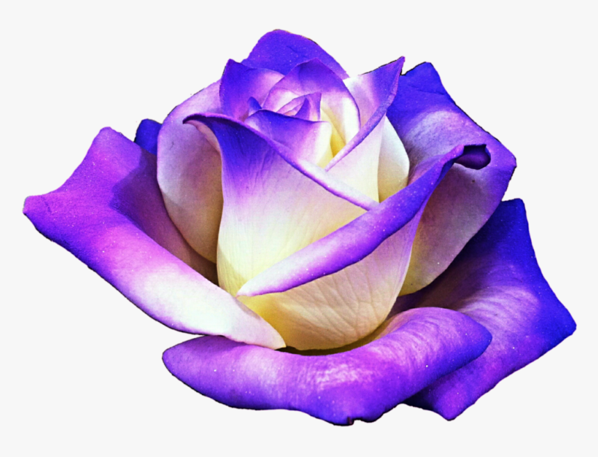 Purple Rose Clipart Png Format - Clip Art Of Purple Rose, Transparent Png, Free Download