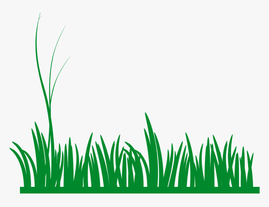 Grass, Lawn, Green, Nature, Meadow, Field, Growth - Grass Clip Art, HD Png Download, Free Download