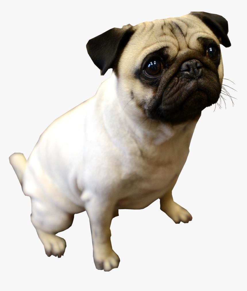Puppy Pug Transparent Background Dog Pug Dog No Background Hd Png Download Kindpng