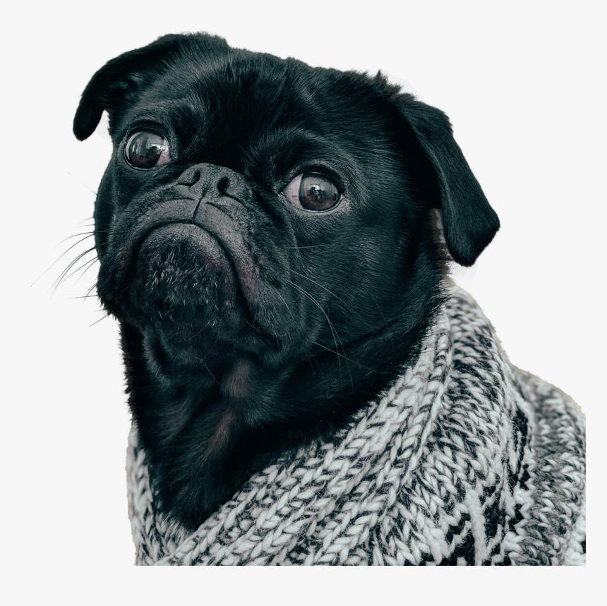 Clip Art Black Pug Dog Black Pug Transparent Background Hd Png Download Kindpng