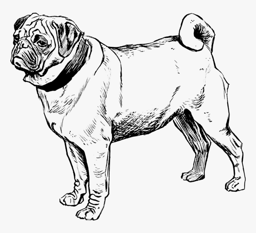 Transparent Black Pug Png - Pug Dogs Coloring Pages, Png Download, Free Download