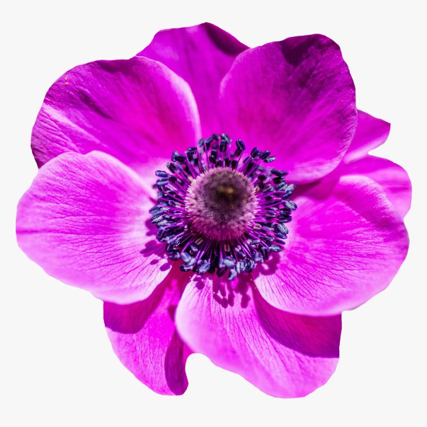 Background Warehouse, Purple Flower - Transparent Flower Image Png, Png Download, Free Download
