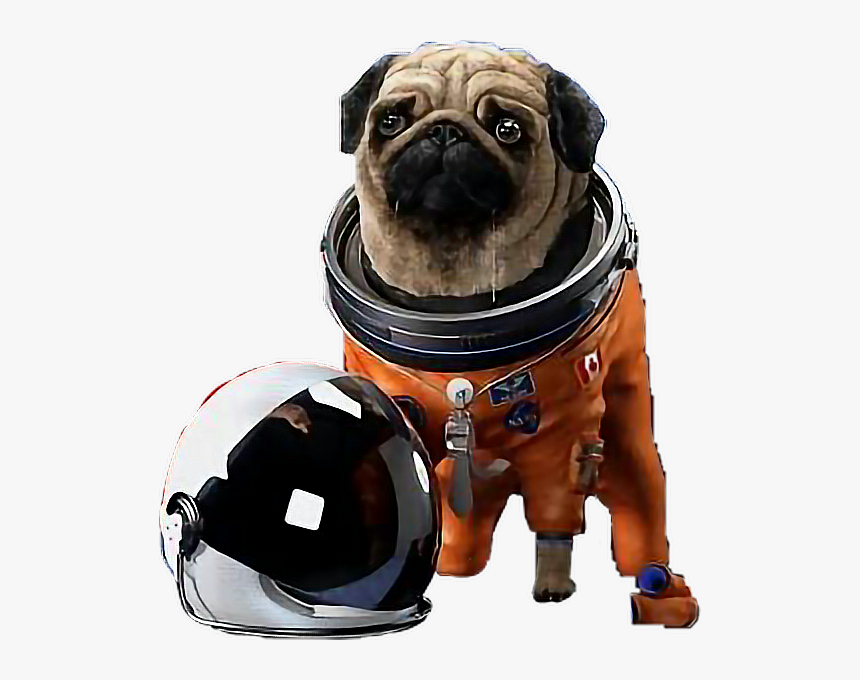 Transparent Space Helmet Png - Pug With Space Helmet, Png Download, Free Download