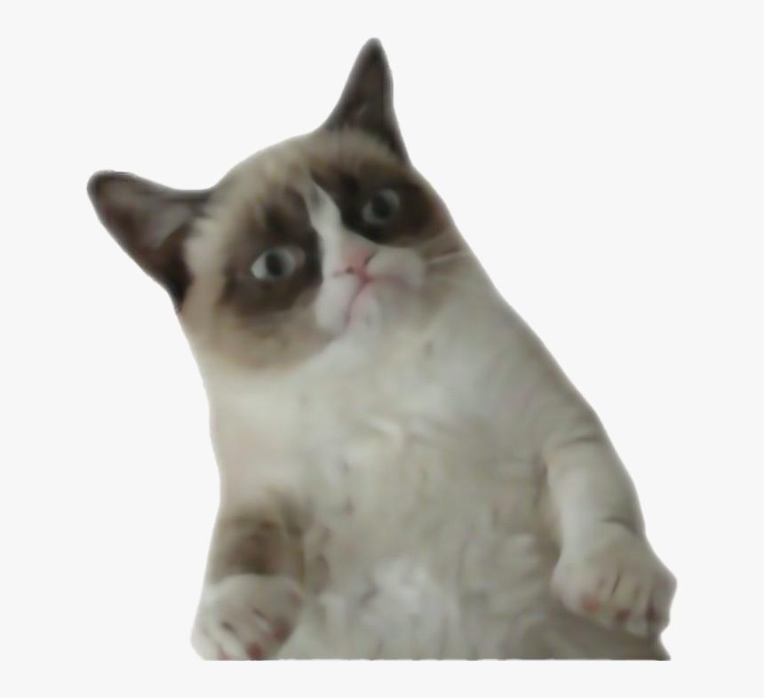 Transparent Funny Cat Png - Grumpy Cat Transparent Background, Png Download, Free Download