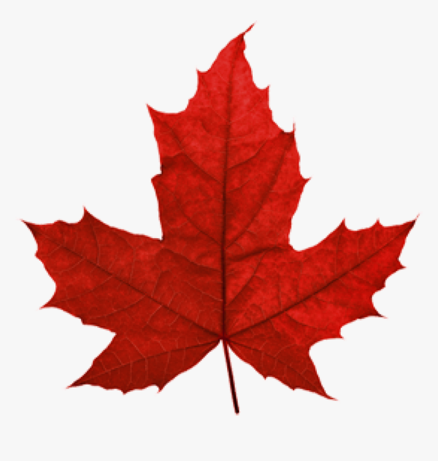 Transparent Maple Leaf Png Transparent Maple Leaf Png