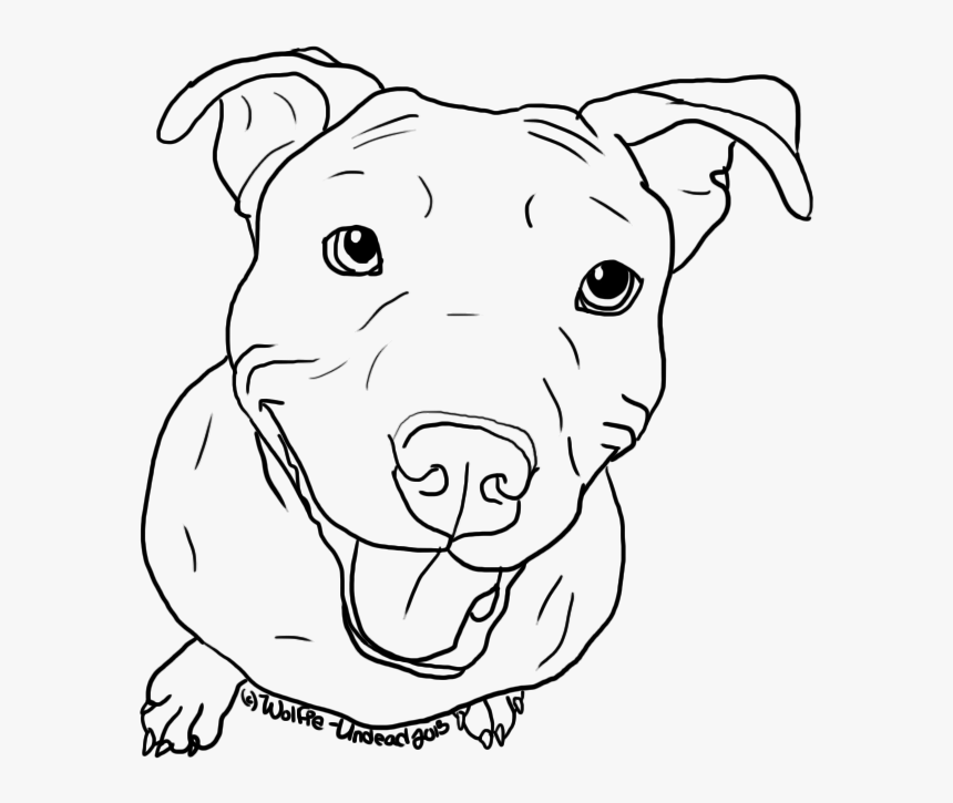 American Pit Bull Terrier Puppy Drawing Line Art - Coloring Pages Of Pitbulls, HD Png Download, Free Download