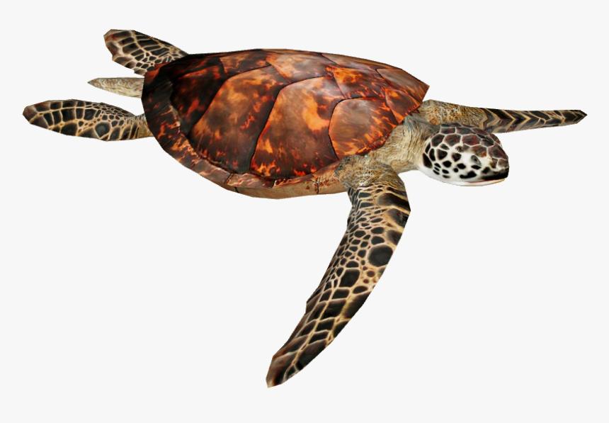 Loggerhead Sea Turtle Png - Hawksbill Sea Turtle, Transparent Png, Free Download