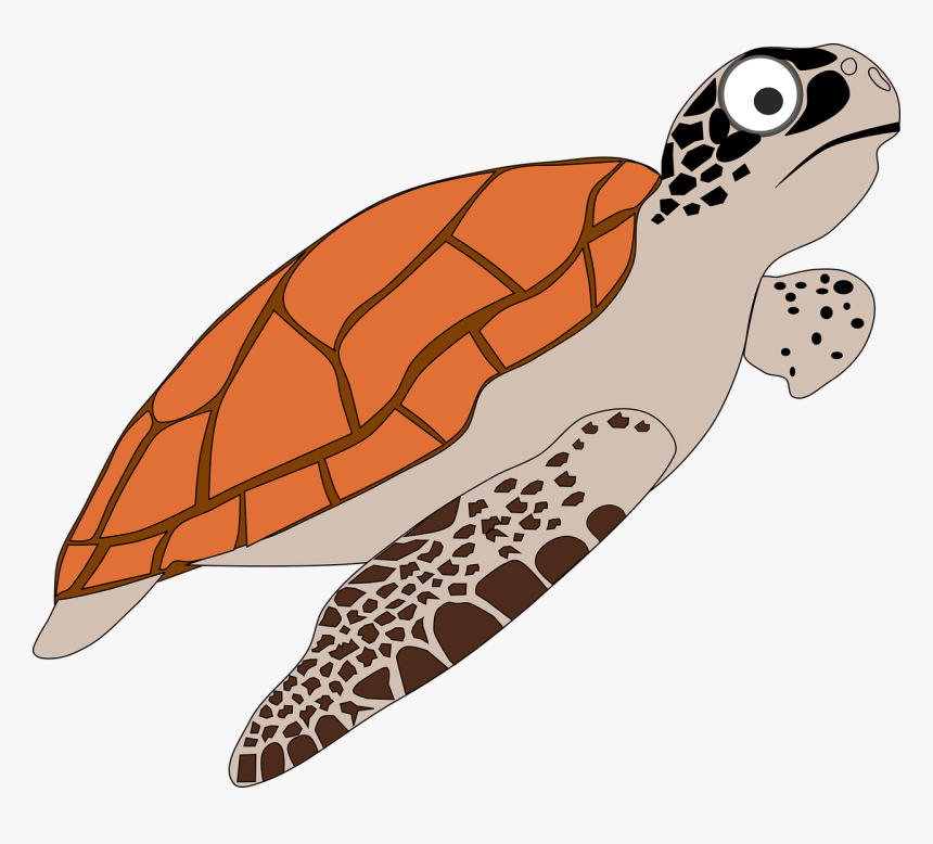 Loggerhead Sea Turtle Cartoon, HD Png Download, Free Download