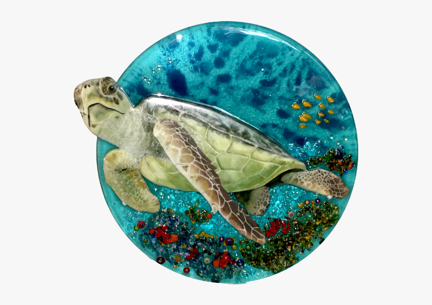 Sea Turtle With Head Out - Kemp's Ridley Sea Turtle, HD Png Download, Free Download