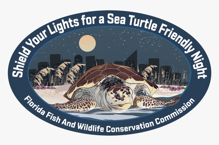 Sea Turtle Decal - Kemp's Ridley Sea Turtle, HD Png Download, Free Download