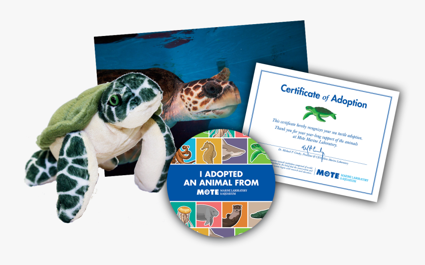 Items Included In Buddy Package - Green Sea Turtle, HD Png Download, Free Download