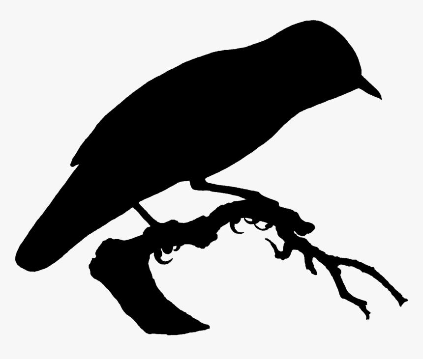 Burung Terbang Di Pantai Hitam Putih Hd Png Download Kindpng