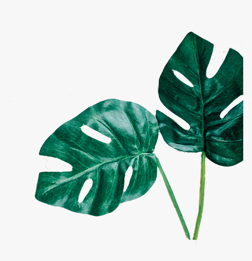Leafs Png - Leafs - Leafs Png, Transparent Png, Free Download