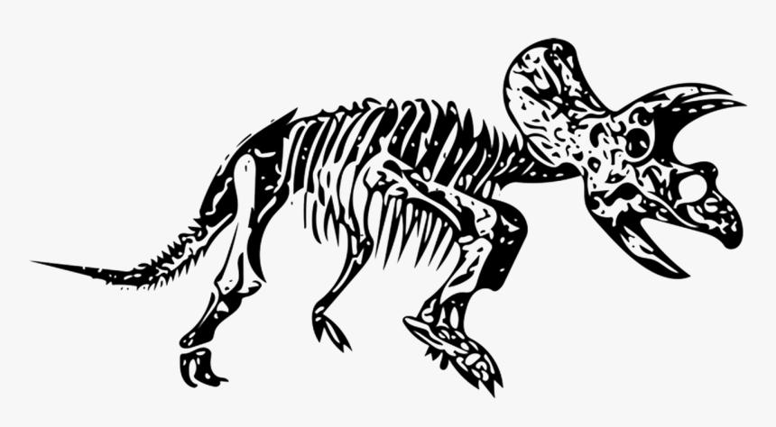 Transparent Skeleton - Dinosaur Fossils Clipart Png, Png Download ,  Transparent Png Image - PNGitem