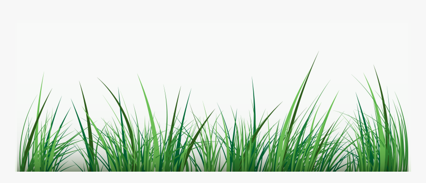 Green Clip Art Water Grass Vector Png Transparent Png Kindpng