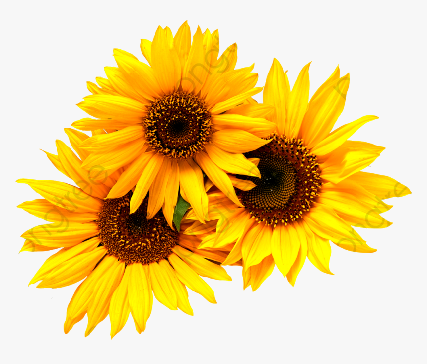 Sunflower Commercial Use Resource Upgrade To Premium ...