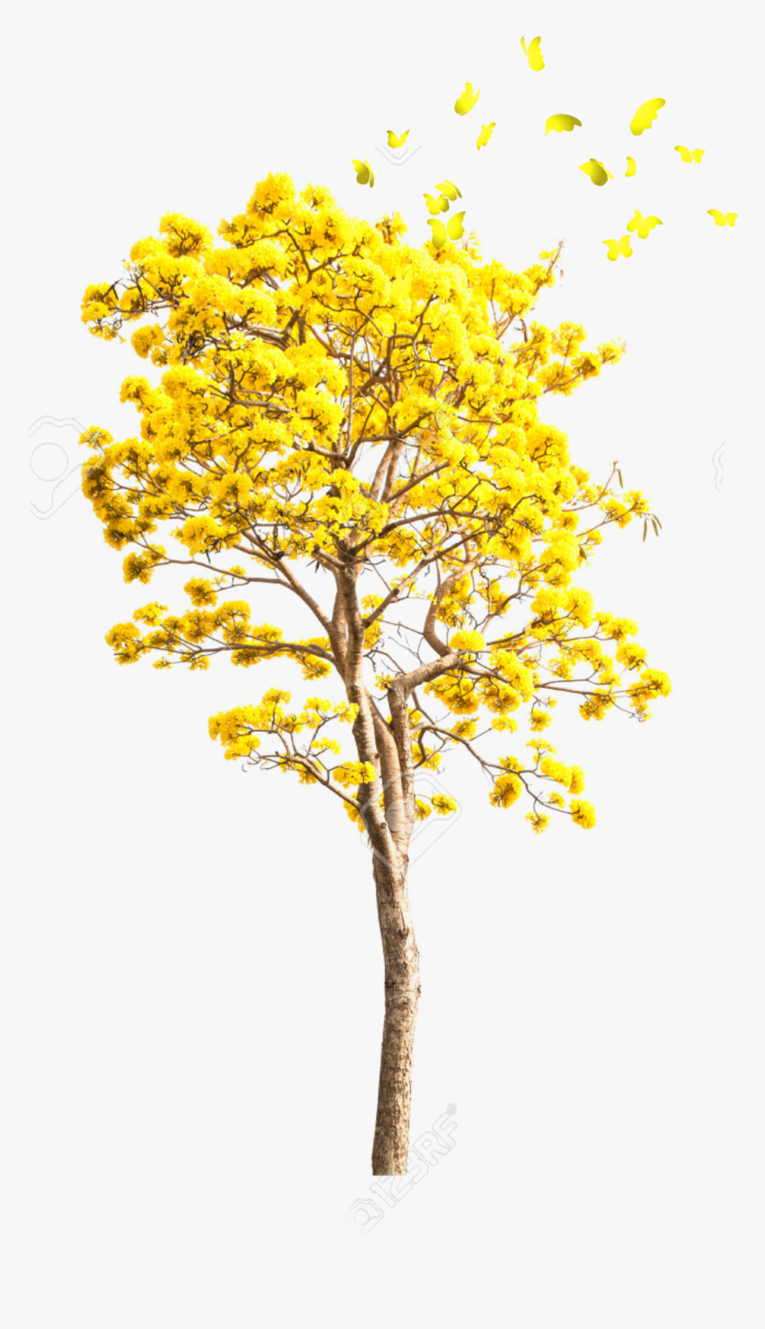 Transparent Yellow Tree Png - Yellow Autumn Tree Png, Png Download, Free Download