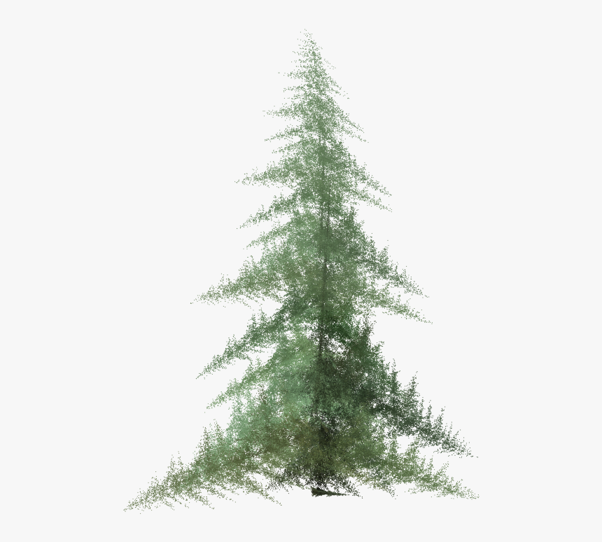 Tree,shortleaf Black Spruce,balsam Fir,white Pine,colorado - Pine Tree Clipart Watercolor, HD Png Download, Free Download