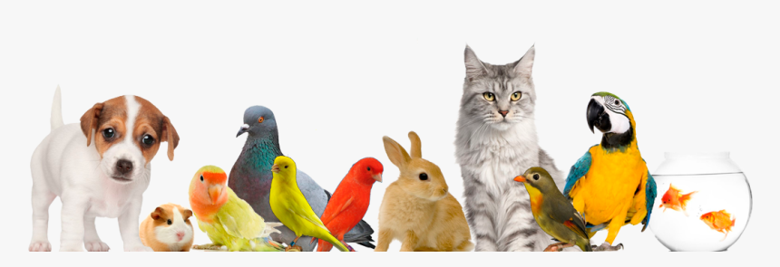 Fondo De Animales Domesticos Png, Transparent Png, Free Download