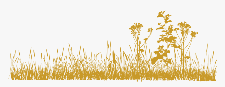 Png Grass All Hd, Transparent Png, Free Download