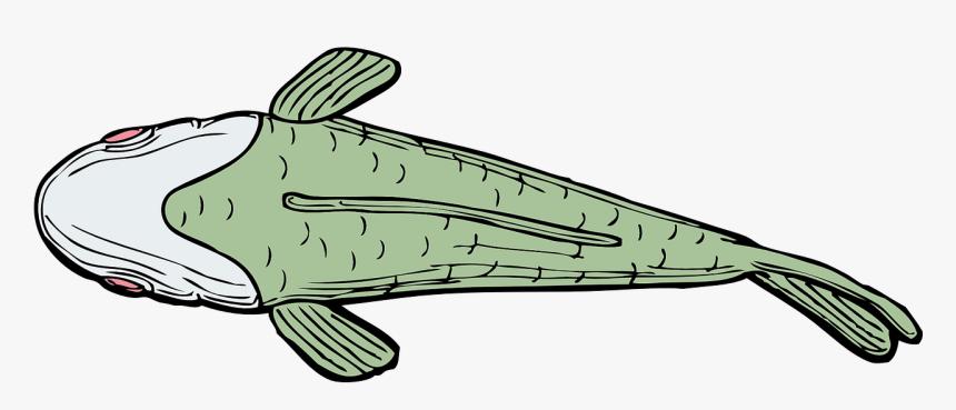 Fish, Aquatic, Swimming, Fins, Scale, Marine, Fauna - Fish Clipart Top View, HD Png Download, Free Download