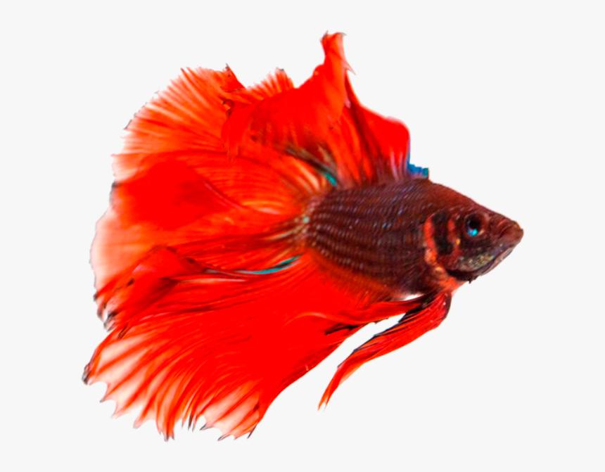 Transparent Background Fish Png, Png Download, Free Download
