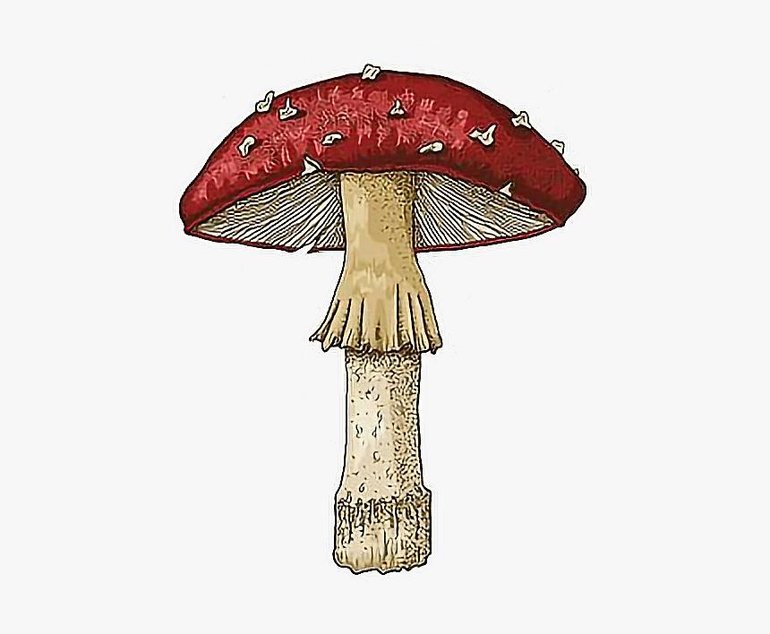Transparent Trippy Mushroom Png Drawing Png Download Kindpng