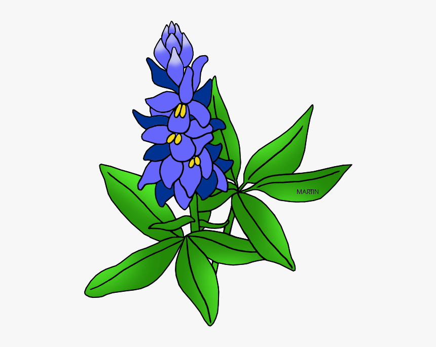 United States Clip Art By Phillip Martin, Texas State - Texas State Flower Drawing, HD Png Download, Free Download
