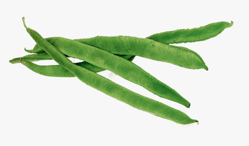 Runner Beans - Green Beans Clipart Png, Transparent Png, Free Download