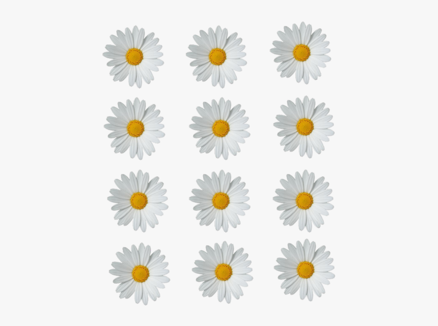 Daisies Png Photo - Daisy Flower Crown Png, Transparent Png, Free Download