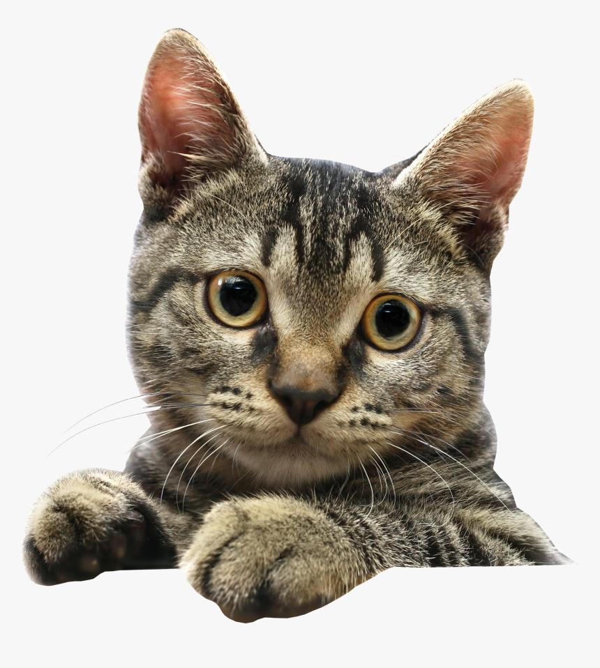 Cat Head Png - Cat Png Transparent, Png Download, Free Download