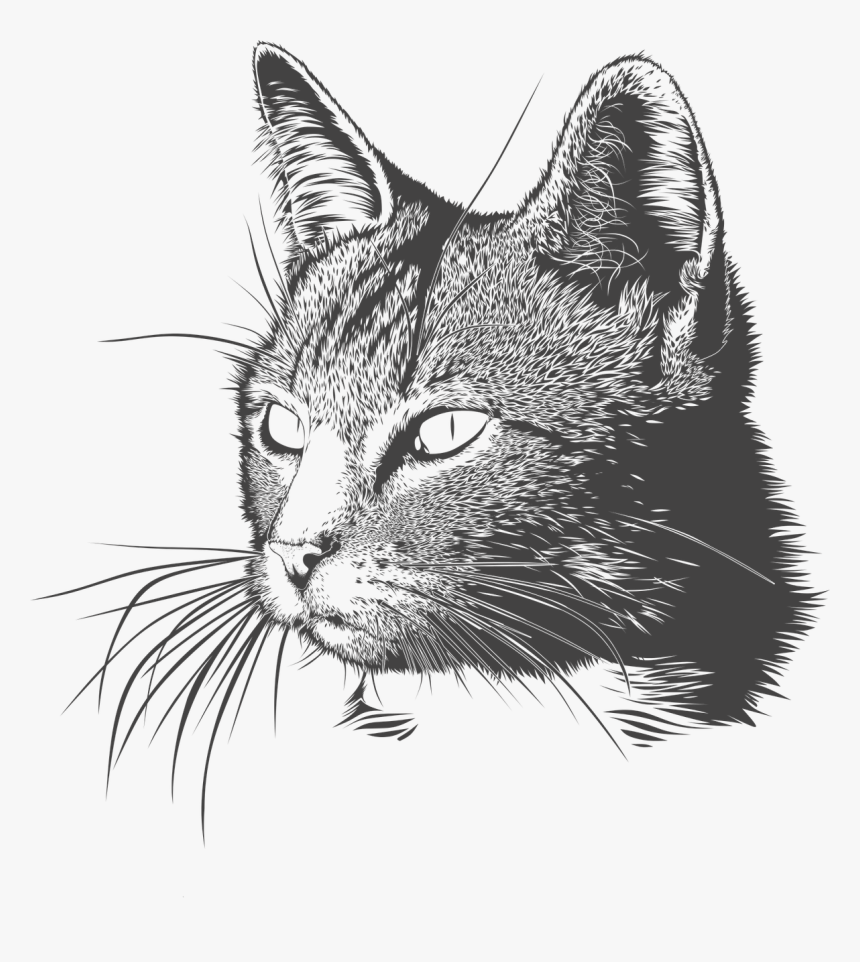 Black And White Cat Drawing Png, Transparent Png, Free Download