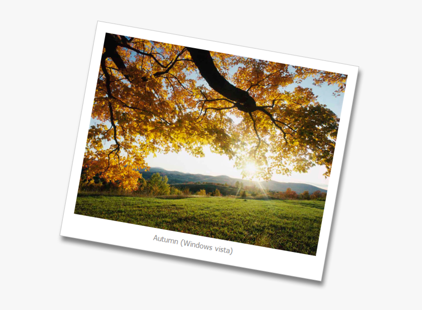 Autumn Leaves, HD Png Download, Free Download
