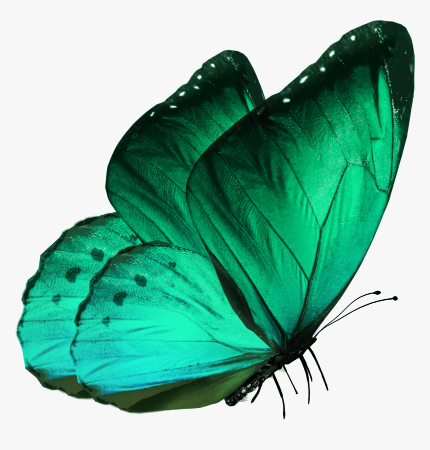 Transparent Butterflies Png Transparent - Blue Morpho Butterfly Side View, Png Download, Free Download