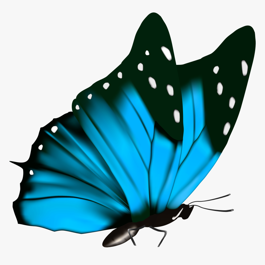 Transparent Blue Butterfly Clipart - Blue Butterfly Transparent Background, HD Png Download, Free Download