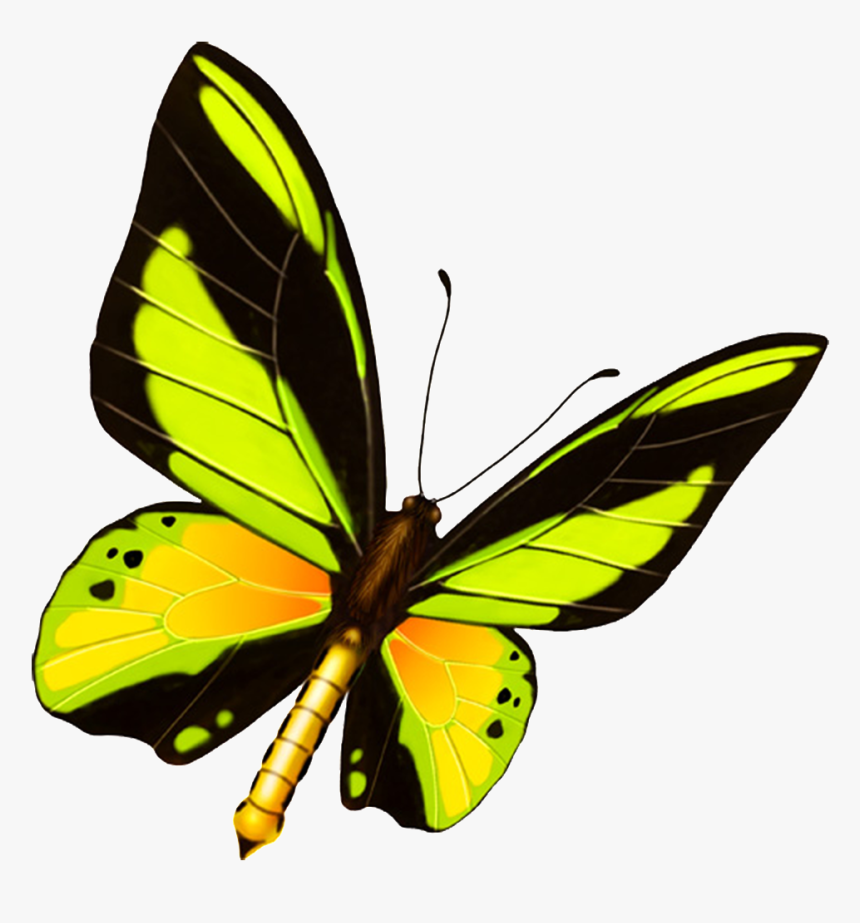 Hd Beautiful Colorful Butterfly Png Kelebek Boyama Renkli