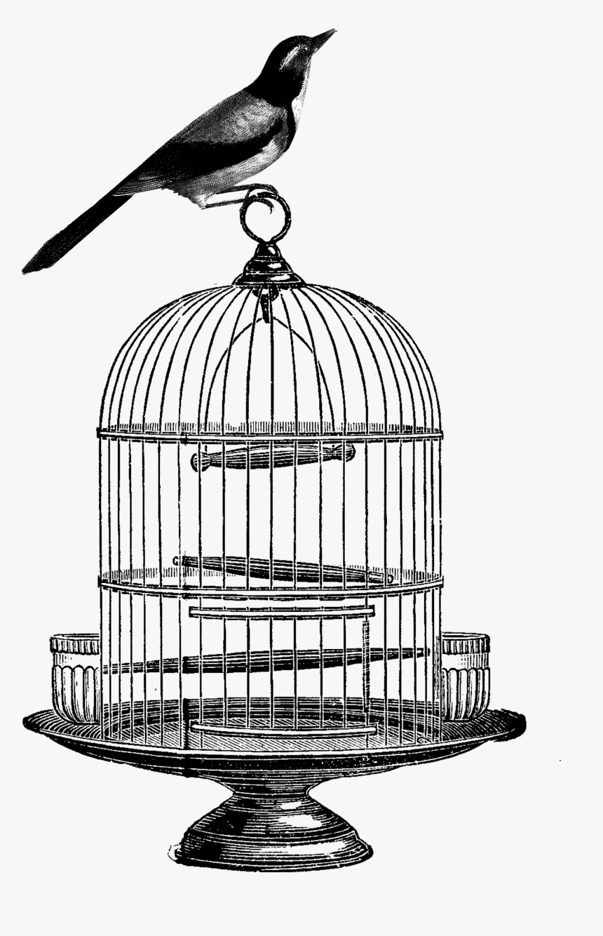 Vector Transparent Birdcage Clip Art - Vintage Bird Cage Drawing, HD Png Download, Free Download