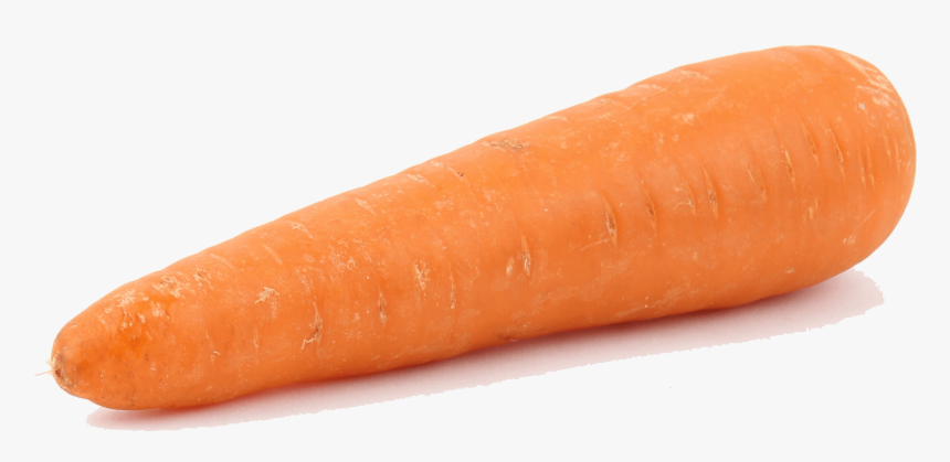 Wild-carrot - Baby Carrot, HD Png Download, Free Download