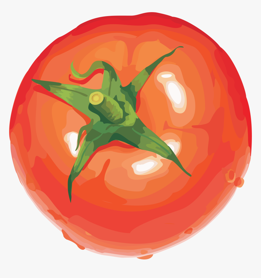 Tomato Cartoon Png - Tomato Drawing Transparent Background, Png Download, Free Download