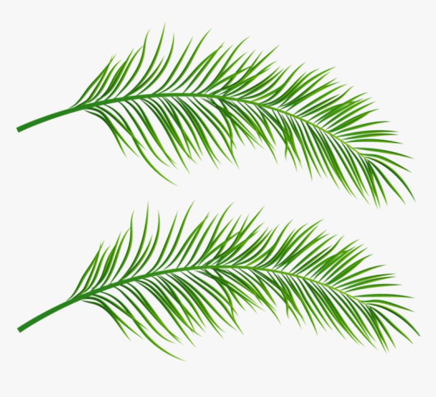 Palm Leaf Png - Palm Leaf Transparent Background, Png Download, Free Download